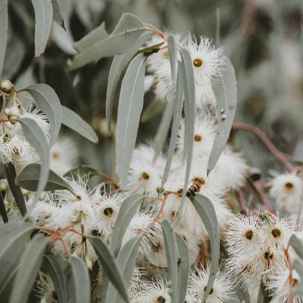 nature bees australian getaway nsw